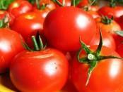 Вирощування помідор: підготовка ґрунту, обробка насіння томата, турбота про розсаду. Підгодівля томатів.