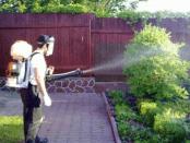 Мідний купорос застосування в садівництві