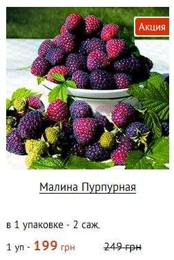 купити саджанці малини