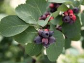 Що посадити в тіні на городі: Овочі якіростуть у тіні