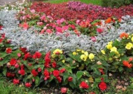 Квіткові композиції. Правила підбору фото