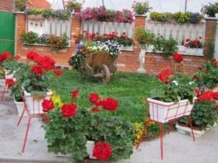 фото квітів для клумби
