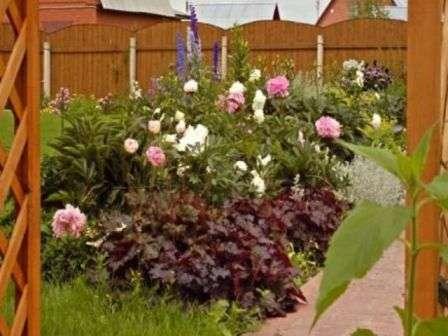 Композиції з багаторічних квітів, фото