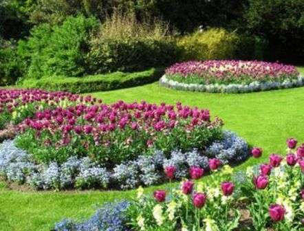 Весняні квіти, фото