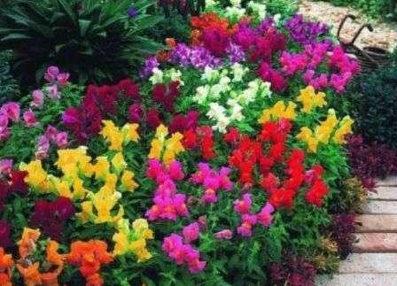 Композиції з однорічних квітів