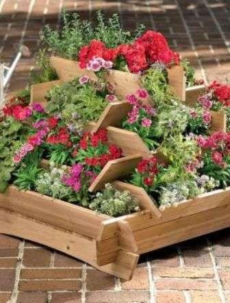 однорічні квіти фото