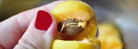 Рецепт абрикосового варення