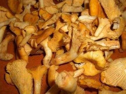Консервуємо гриби лисички
