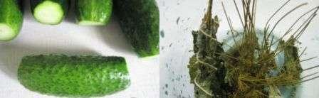 Мариновані огірки з кетчупом Чілі рецепт