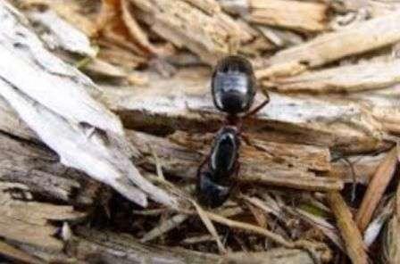 Як позбутися мурах в хаті та будинку