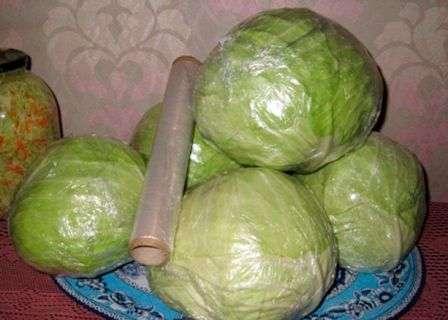 Як зберігати капусту на зиму в погребі