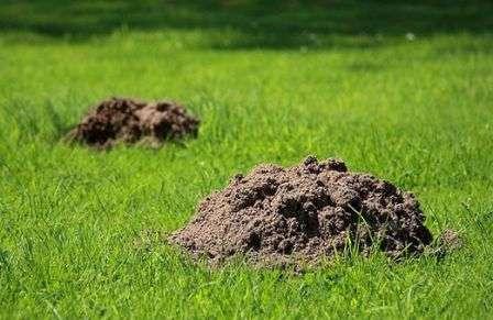 Як боротися з кротами на городі