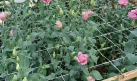 Вирощування квітів в теплиці.Якою має бути теплиця...