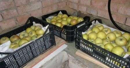 Зберігання яблук в ящиках