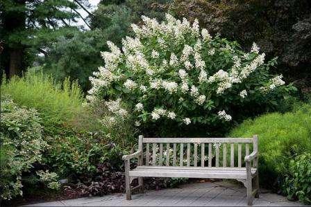 Догляд та посадка садової гортезії