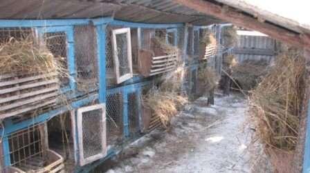 Сучасне становище кролівництва в Україні