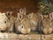 Кролівництво для початківців відео розведення кролів...