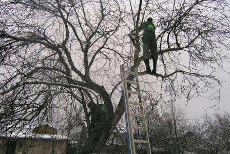 Як правильно обрізати дерева на зиму
