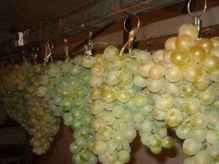 Зберігання винограду на зиму