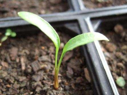 Як зберігати насіння