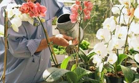 умови догляду за орхідеєю