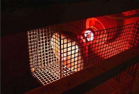 Інфрачервона лампа для обігріву курятника