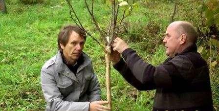 Підготовка до зими плодових (садових) дерев