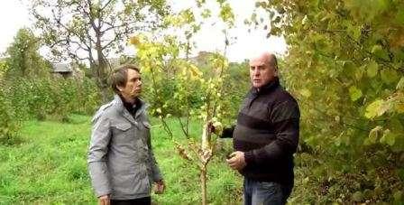 Підготовка до зими плодових дерев