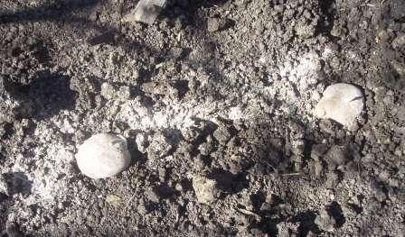 Агротехніка посадки картоплі під солому