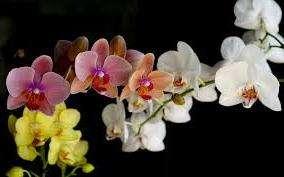 Вирощування орхідей: основні вимоги