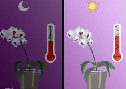 Вирощування орхідей в домашніх умовах, розмноження