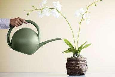 як поливати орхідеї