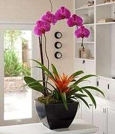 vuroshhyvannya-orhidey-7