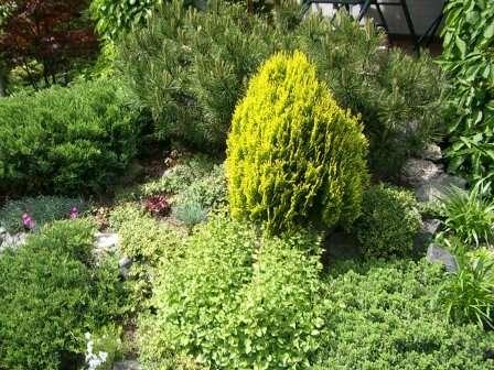 фото декоративних дерев