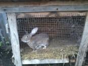 Клітки для кролів своїми руками-як зробити клітку для кроликів