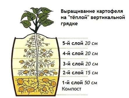 Вирощування картоплі на вертикальних грядках