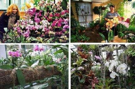 Зимовий сад в будинку своїми руками. Фото квітів