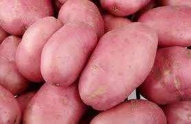 Посадка картоплі своїми руками