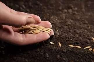 Посадка і вирощування розсади кабачків