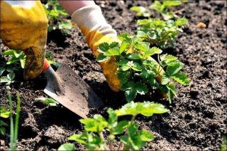 Коли садити саджанці в грунт навесні і восени?