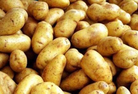 Як виростити ранню картоплю відео