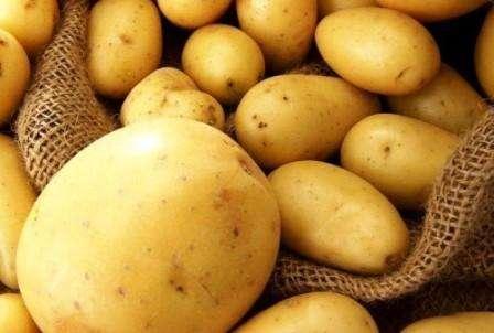 Загальні правила вирощування ранньої картоплі