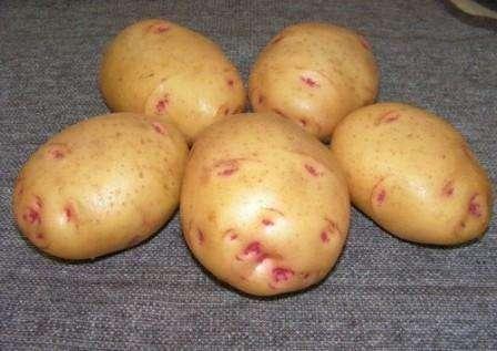 Як вирощувати ранню картоплю