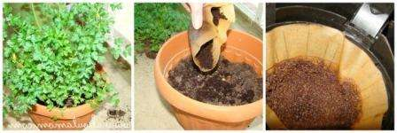Використання добрив для кімнатних рослин