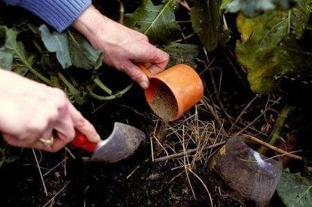 Якими добривами підгодовувати помідори