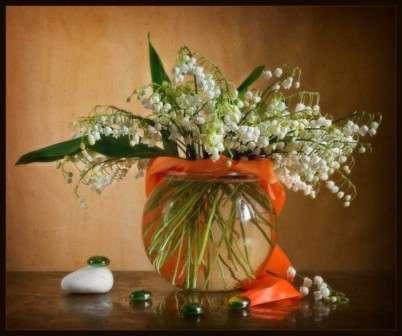 квітка конвалія фото