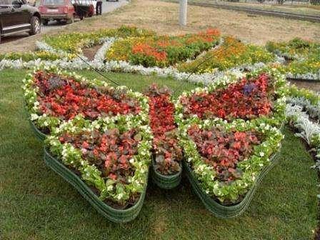 однорічні квіти для клумби з фото