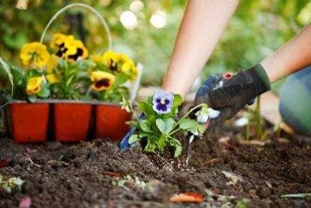 Як вибрати місце для клумби з квітами