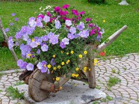 клумба з сезонних квітів фото