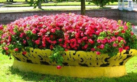 клумба з рожевих квітів фото